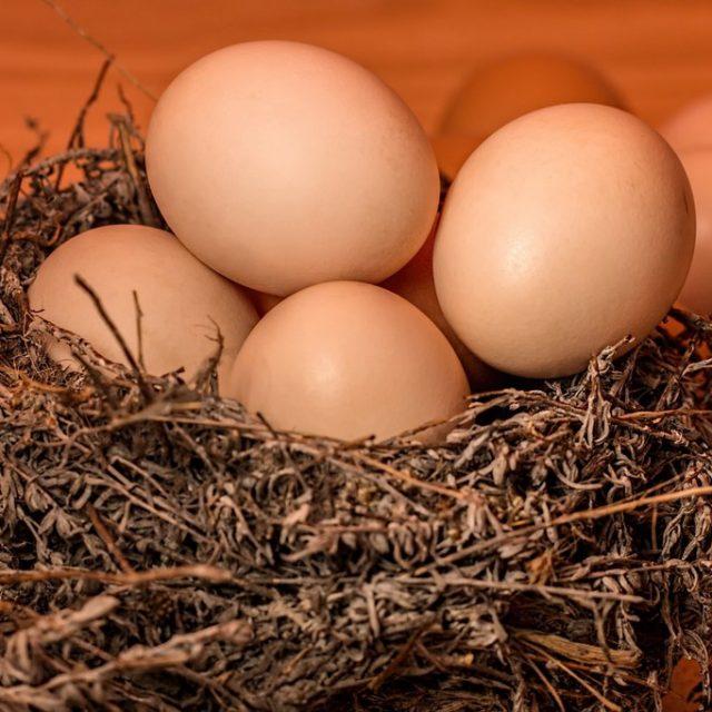 huevos y nido
